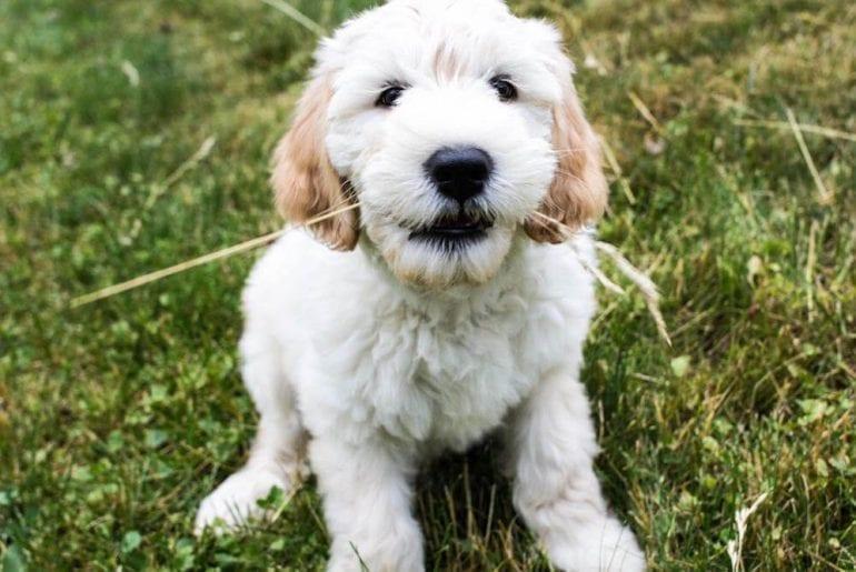 My Dog Koa