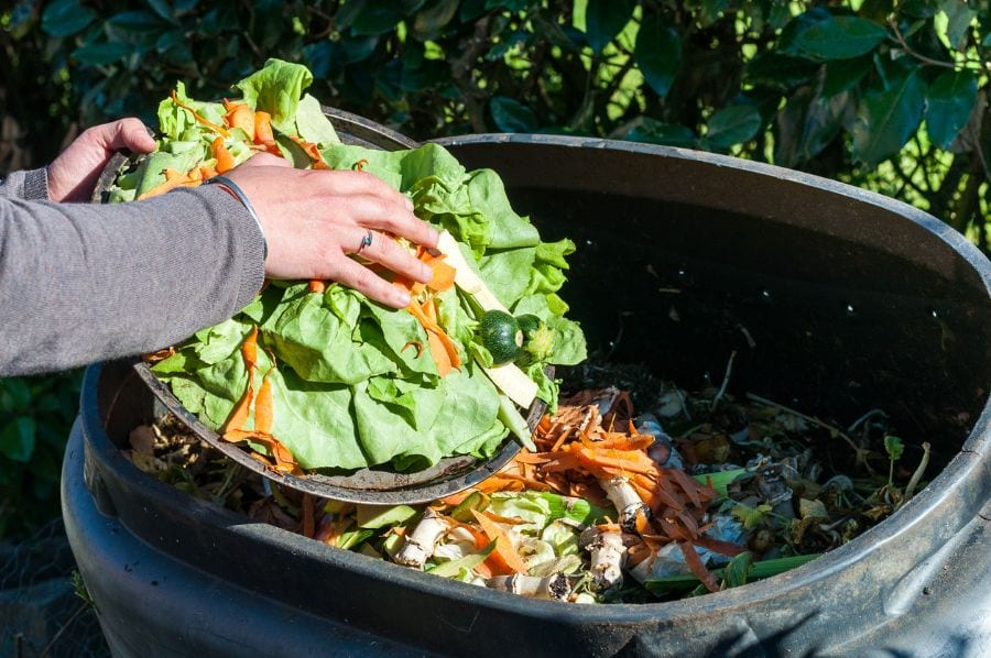 Putting Vegetables Into Compost