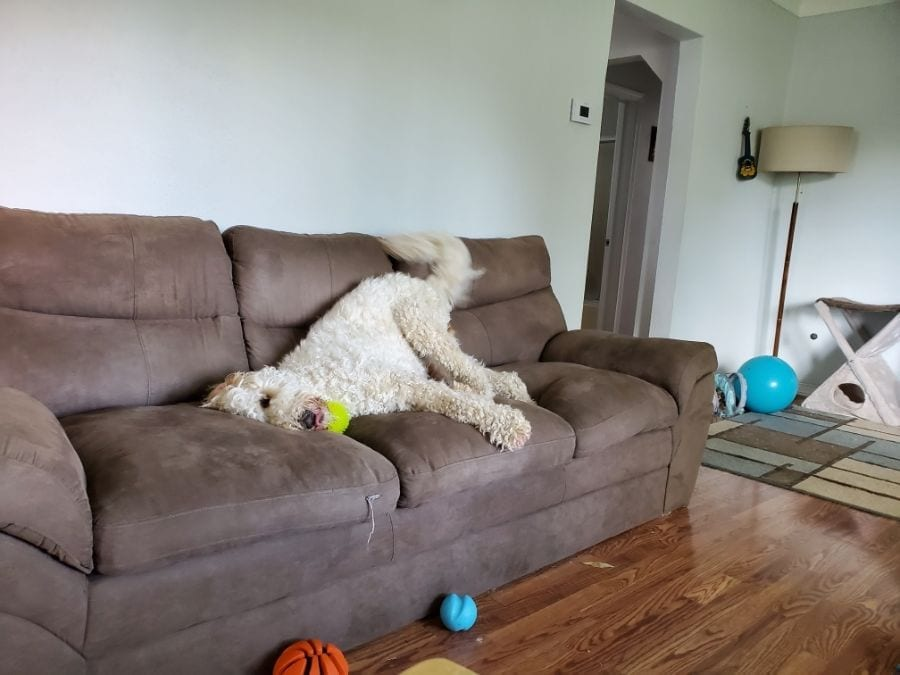 Dog Smell Out Of Your Couch