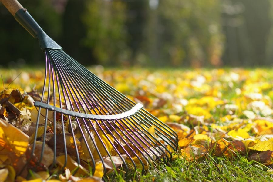 4 Simple Ways to Shred Leaves Without a Shredder