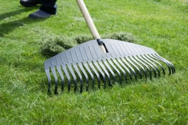 Grass Clippings from Mowing the Lawn