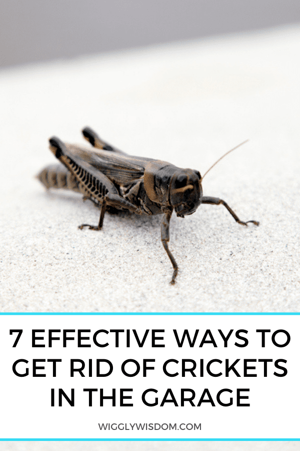 7 Effective Ways to Get Rid of Crickets in the Garage