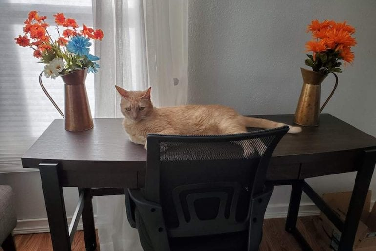 Cat laying on a desk next to decorative flowers