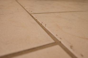 Ants on Tile Flooring