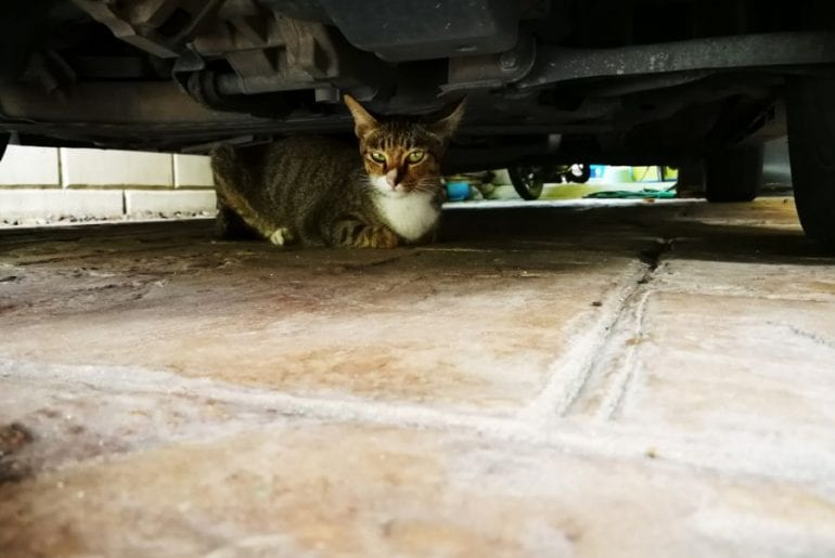 Cat in Garage