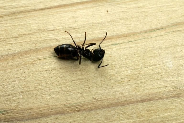 Dead Ant on Floor