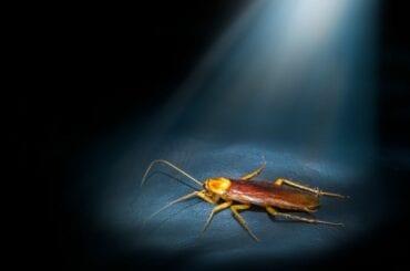 Cockroach in Darkness