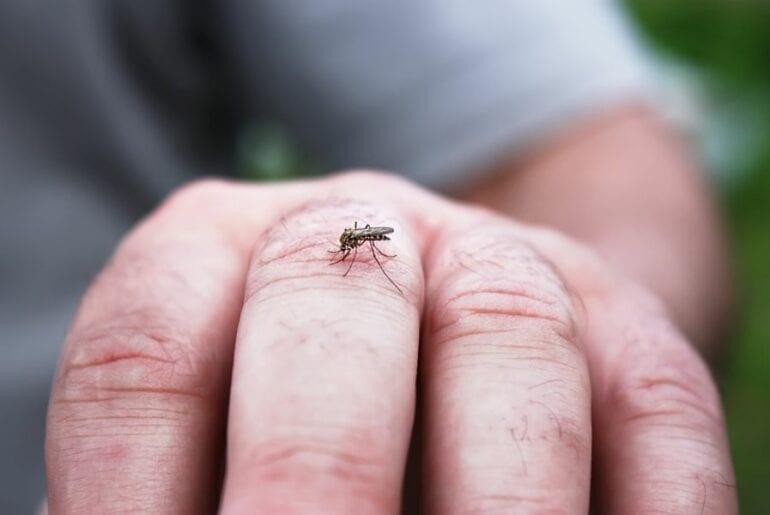 Mosquito on Hand