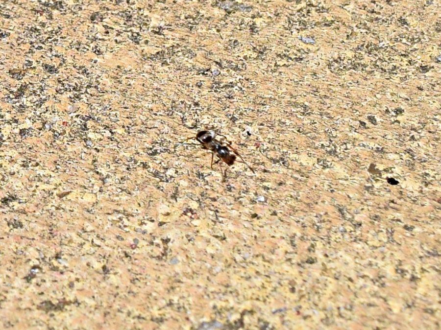 Ant on Patio